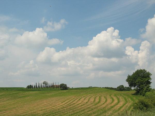 Country Field 37.jpg