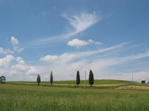 Country Field 39.jpg