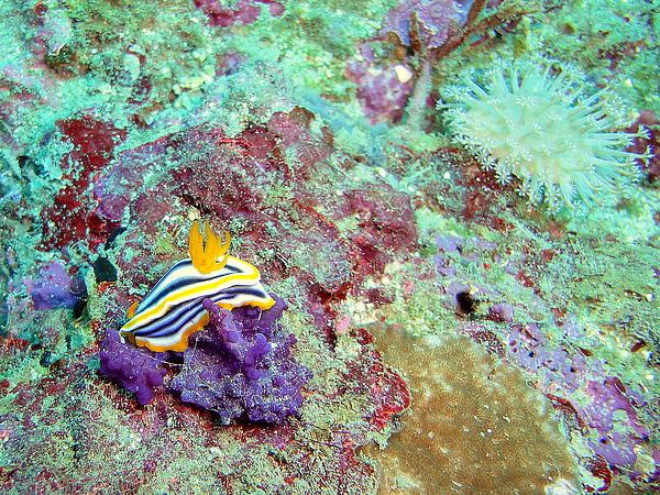 101 兩隻海蝸蝓.jpg
