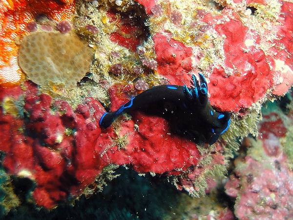 20 海蝸蝓.jpg