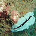 60 海蝸蝓.jpg