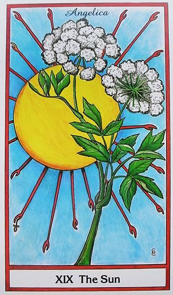太陽-歐白芷