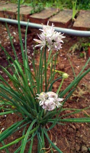 春季新進植物1.jpg