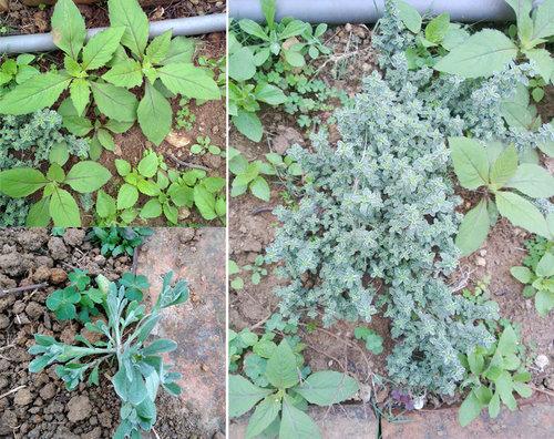 春季新進植物2.jpg