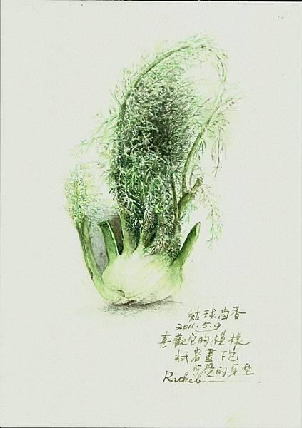 結球茴香-麗秋