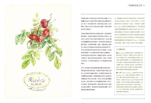 玫瑰3.jpg