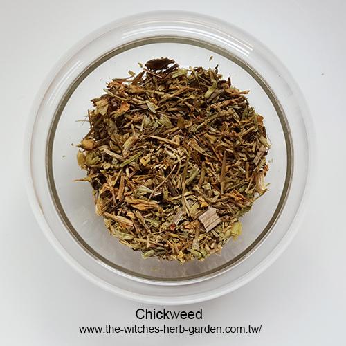 Chickweed繁縷500.jpg