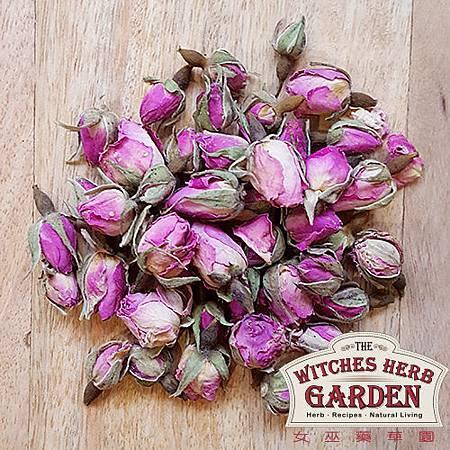 玫瑰花苞500-2.jpg