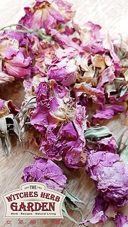 玫瑰花瓣-整朵500logo.jpg