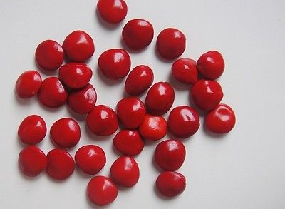 海紅豆Adenanthera pavonina.jpg