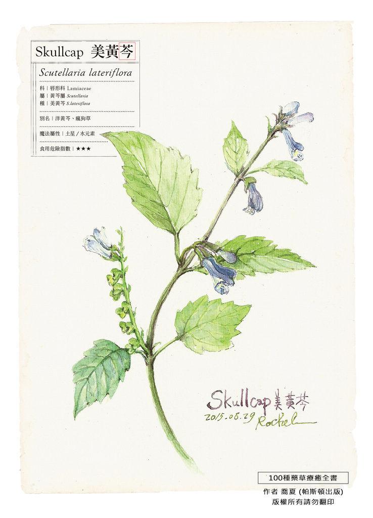 p366美黃芩.jpg
