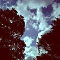 政大的天空