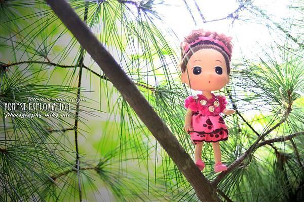 森林探索-006.jpg