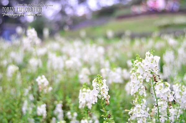 森林探索-020-01-01.jpg