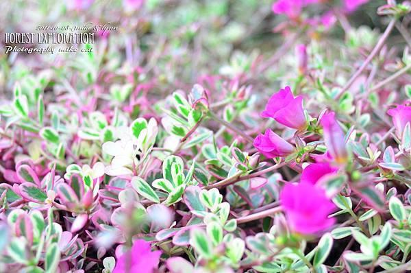森林探索-020-03.jpg