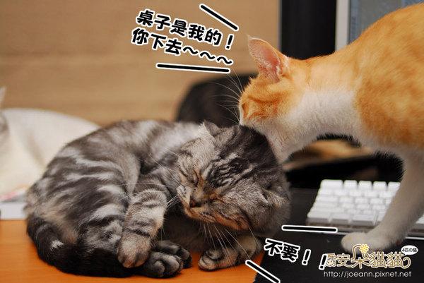 DSC_8047.jpg
