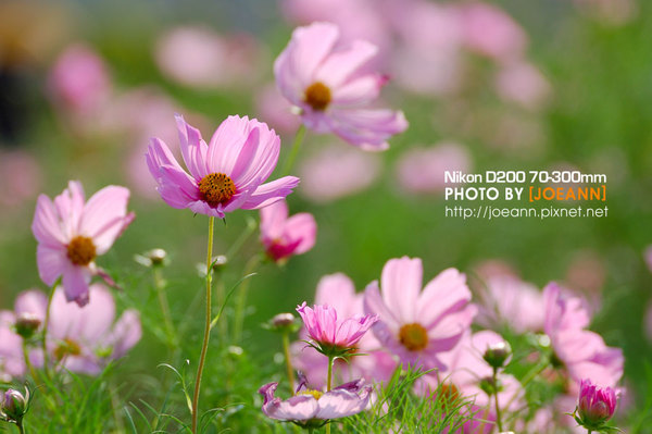 DSC_4716.jpg