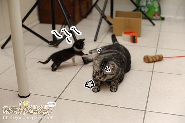 DSC_4570.jpg