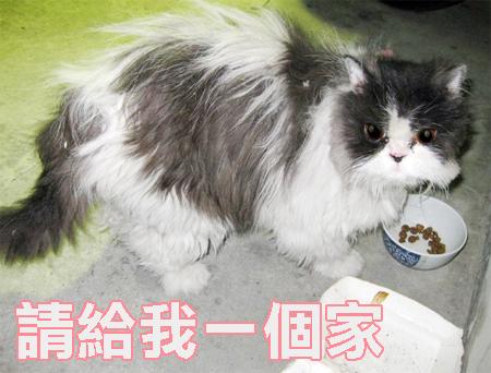 cattt--1.jpg