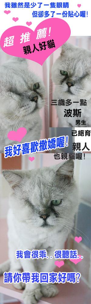 親人好貓.jpg