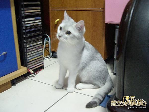 cat-038.jpg