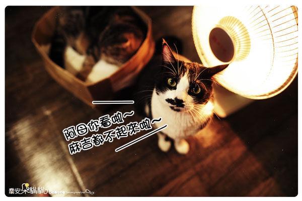 朵貓貓.jpg