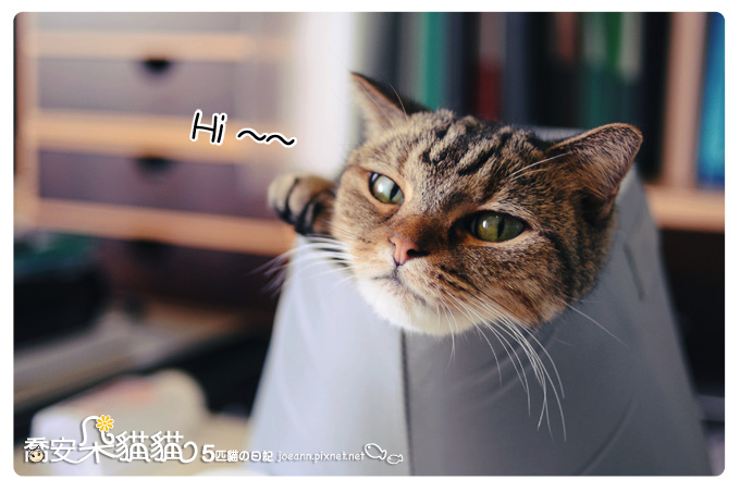 DSC_2285.jpg