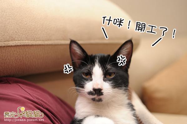 DSC_8888.jpg