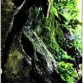 201007台中大雪山04.jpg