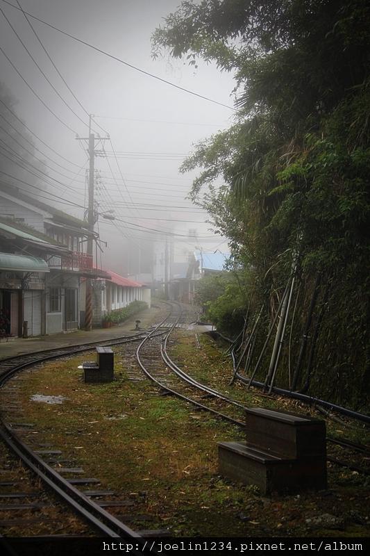 阿里山IMG_1167.JPG