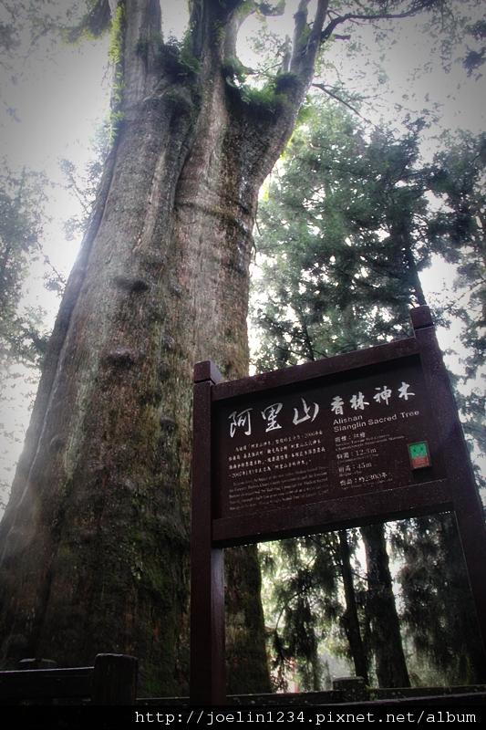 阿里山IMG_1380.JPG