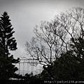阿里山IMG_1112.JPG