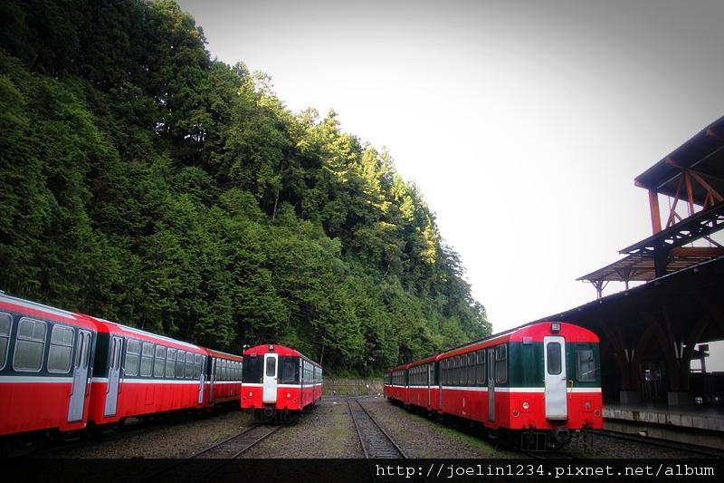 阿里山IMG_1422.JPG