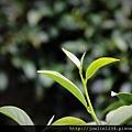 阿里山IMG_1467.JPG