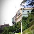 阿里山IMG_1473.JPG