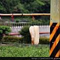坪林騎單車IMG_2336.JPG