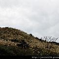 金瓜石單車IMG_6066.JPG