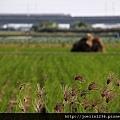 20111203嘉義單車紫線IMG_6401.JPG