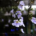 20111202嘉義蒜頭糖廠IMG_6287.JPG