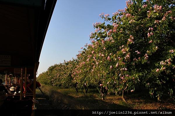 20111203嘉義蒜頭糖場IMG_6599.JPG