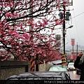 陽明山走春IMG_8362.JPG