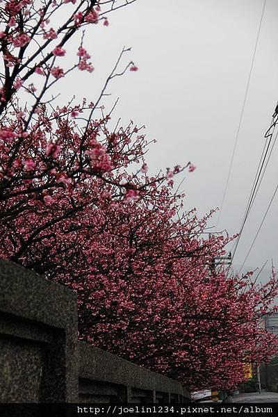 陽明山走春IMG_8368.JPG