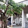 20120211宜蘭凱旋社區公園IMG_8659