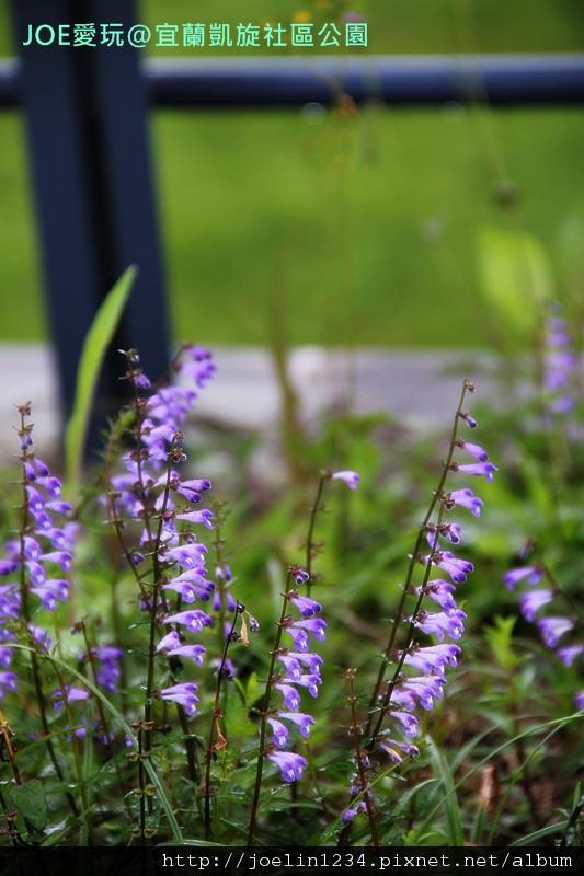 20120211宜蘭凱旋社區公園IMG_8658
