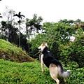 201202南投哈好營地IMG_8837