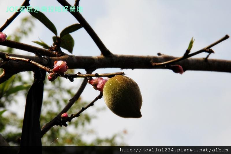201202南投哈好營地IMG_8867