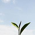 20120627宜蘭有機農村體驗IMG_4095