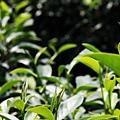 20120627宜蘭有機農村體驗IMG_4109
