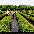 20120627宜蘭有機農村體驗IMG_4117