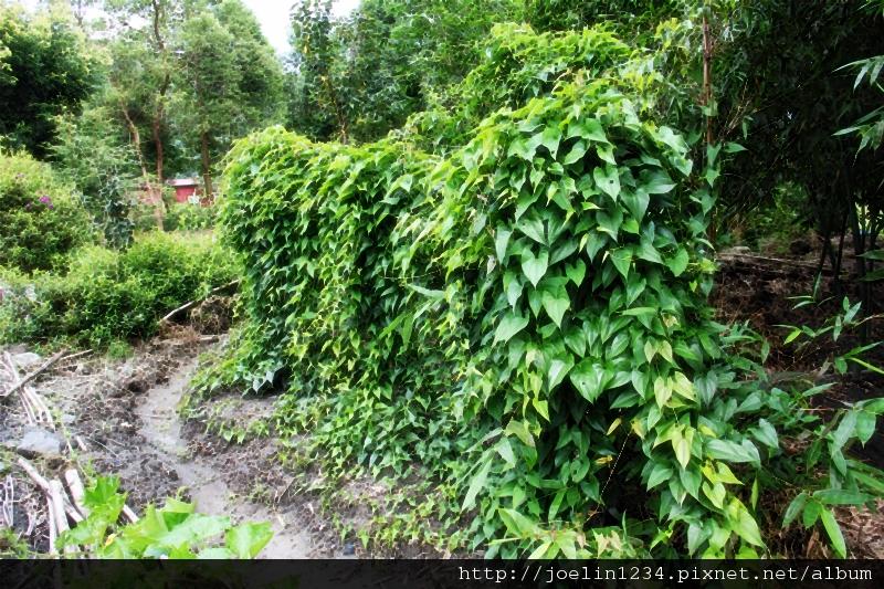 20120627宜蘭有機農村體驗IMG_4292